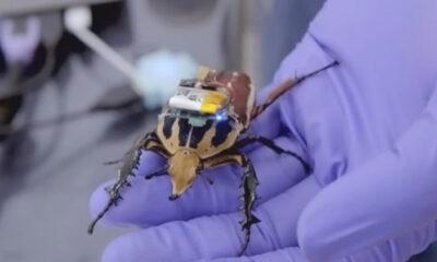 I-BOT Asisten Cyborg Serangga, Membantu Mencari Korban Bencana, di Ciptakan Mahasiswa ITS